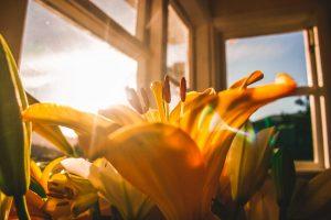 zomerschoonmaak ramen wassen